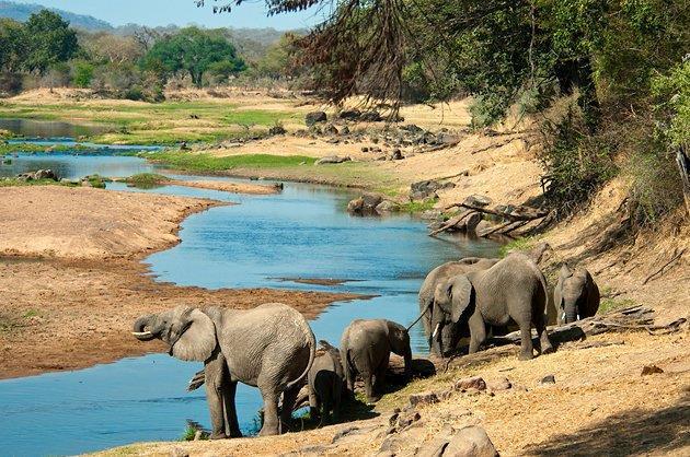 מגוון טיולי ספארי בקניה עם איילה גיאוגרפית