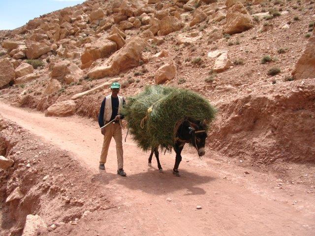 טרק למרוקו