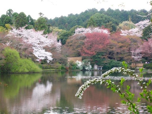 טיולים מאורגנים ליפן